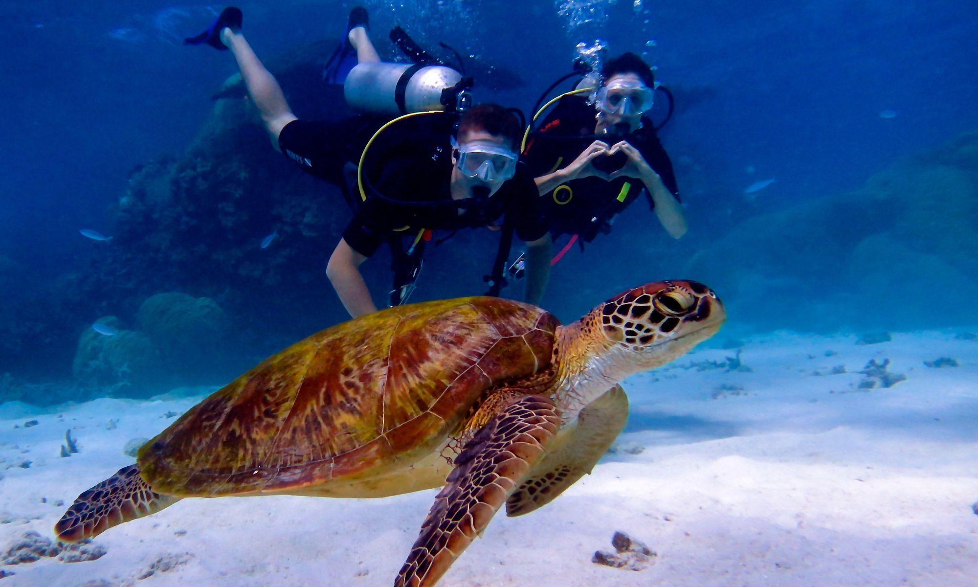 Blue Dive Blog