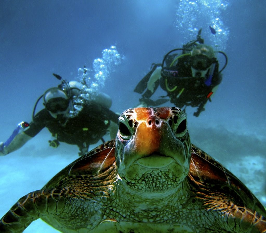 Diving with a turtle from Port Douglas