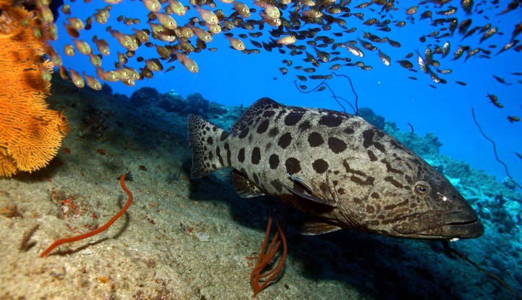 Great Barrier Reef diving Port Douglas