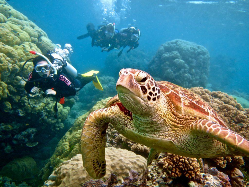 Scuba diving Port Douglas